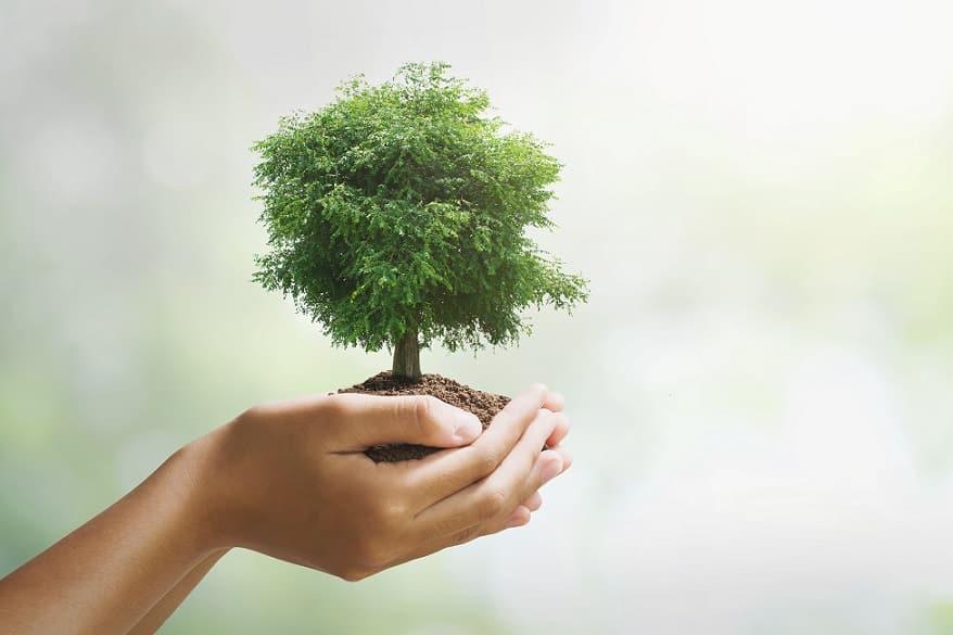 ידיים מחזיקות עץ ירוק וקטן שצומח
