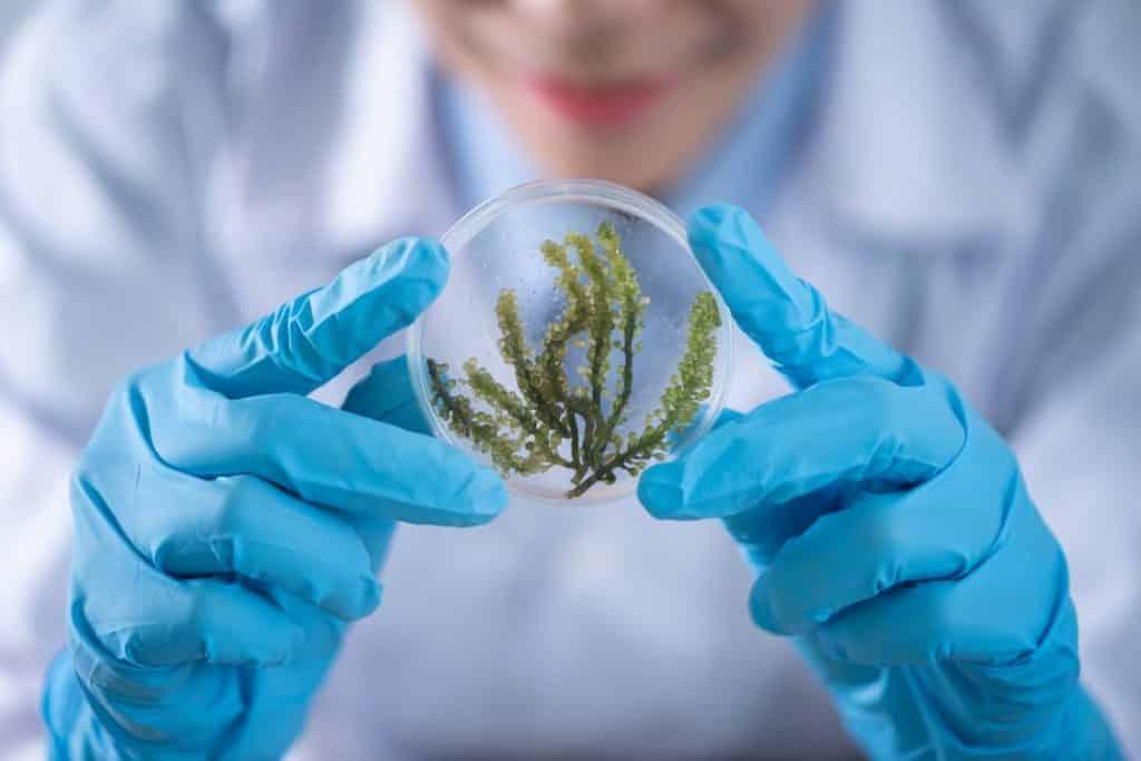 תמונה שמדמה מינון מומלץ של צמח