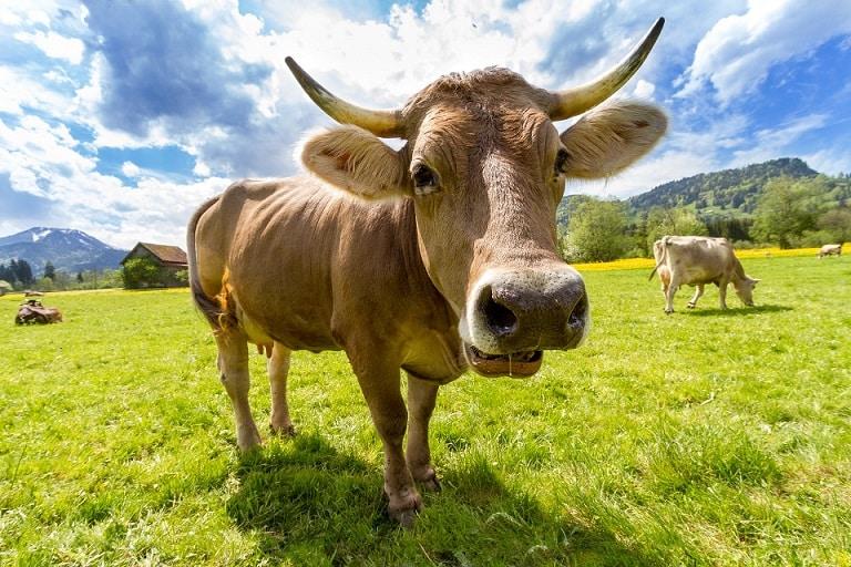 Photo of אבקת חלבון בקר: 2 אבקות חלבון בקר הכי טובות בעולם
