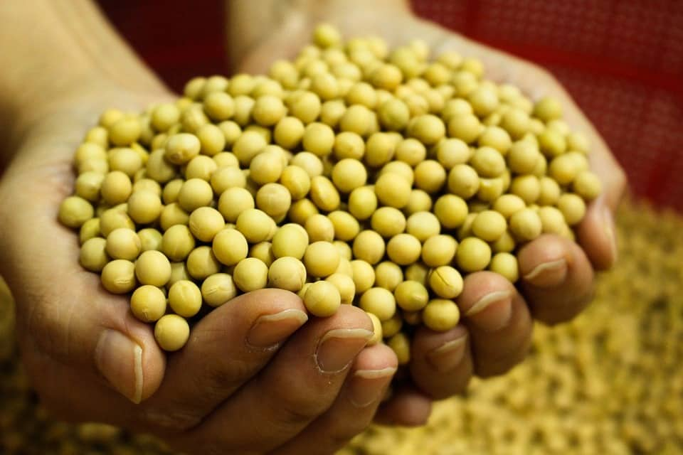 Photo of אבקת חלבון סויה: 3 אבקות חלבון סויה הכי טובות בעולם לשנת 2020