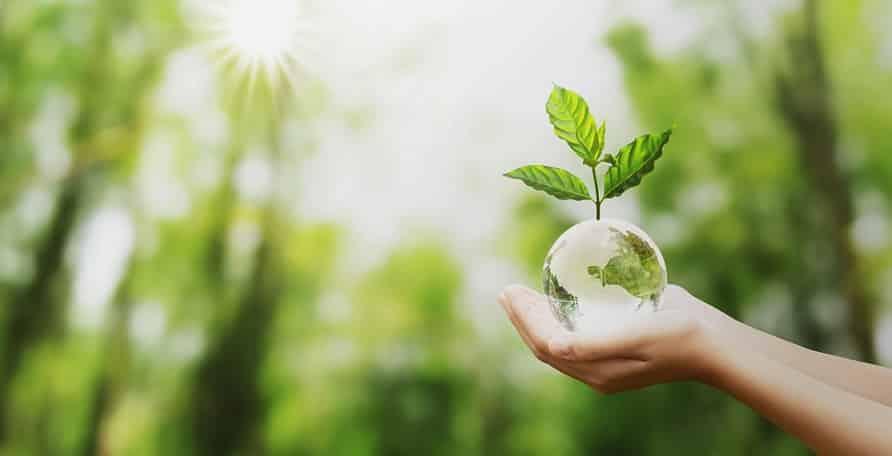 יד מחזיקה כדור בדולח שקוף על רקע של יער ירוק