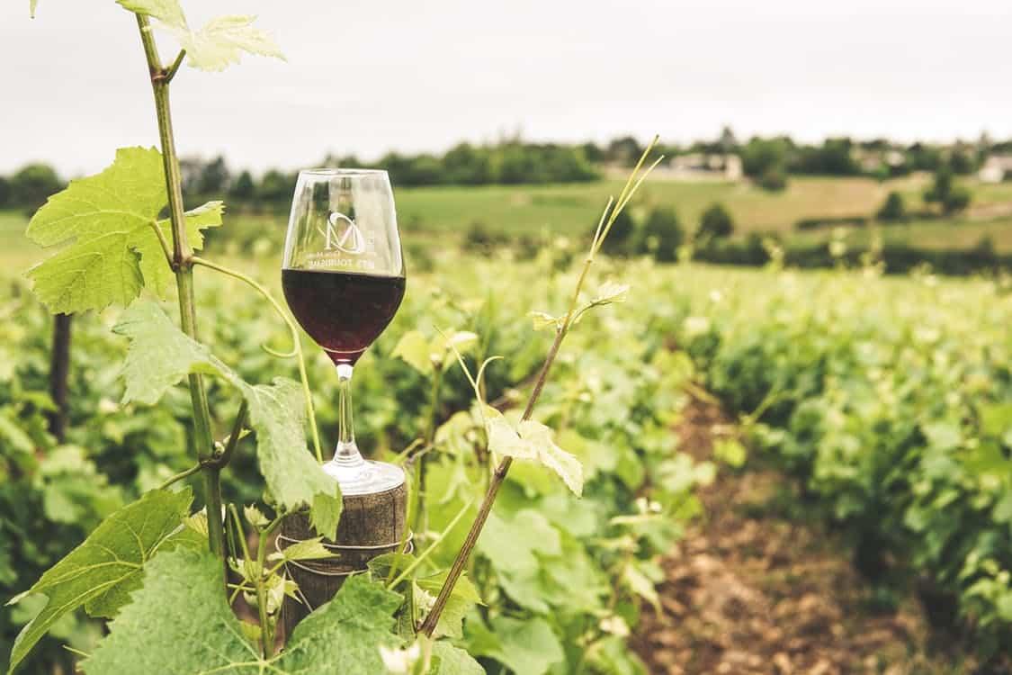 כוס יין על עץ של ענבים ביקב