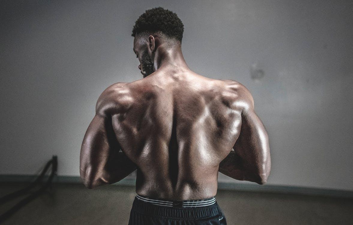 גב גדול ושרירי של גבר באדיבילדר מקצועי