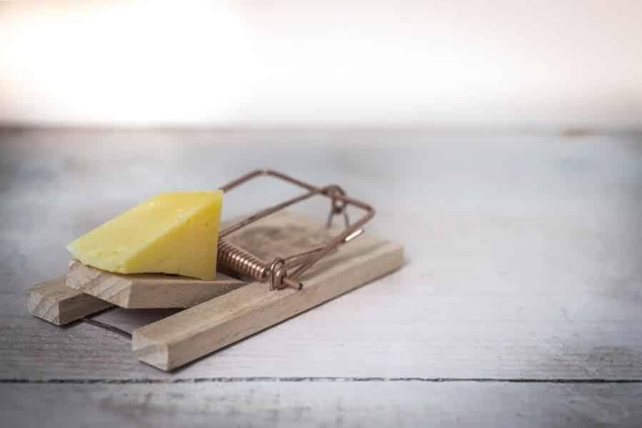 מלכודת עכברים עם גבינה בפנים אילוסטרציה לסכנה אפשרית
